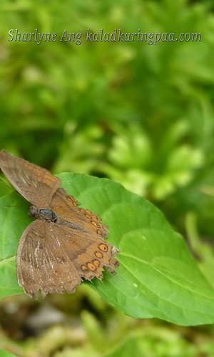 Butterfly Farm in Puerto Princesa 9