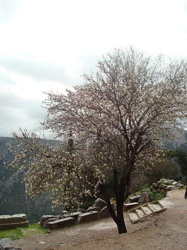 Tree in Delphi