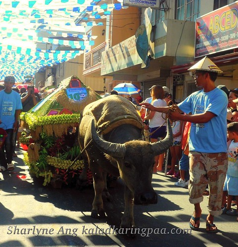 Tamaraw on Parade in Pahiyas Festival