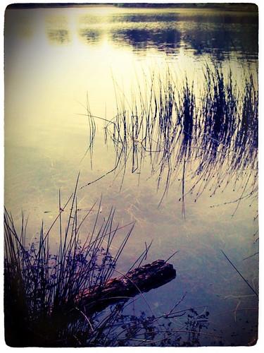 Wollaton Lake