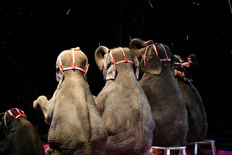 Circus 3b