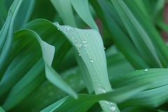 spring 029