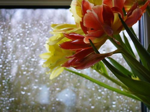 Tulips and rain outside