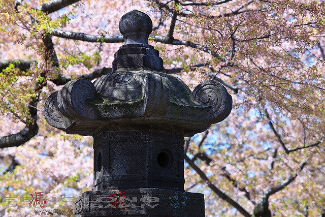 Monument at the National Cherry Blossom Festival in DC