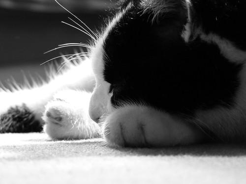 Die Katze gibt vor, zu schlafen um desto klarer sehen zu können. by luisa-m