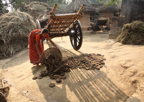 Drying cattle dung for household fuel in West ...