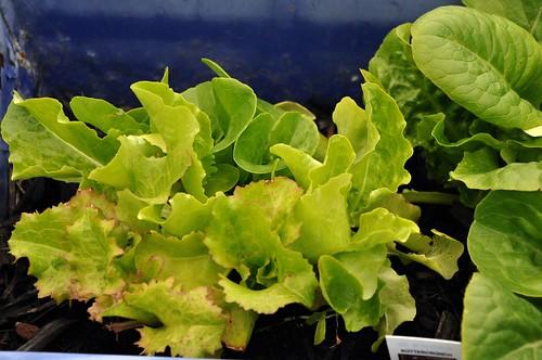 Mehr Salat