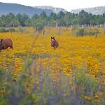 "Not So Wild Horses <a style=""margin-left:10px; font-size:0.8em;"" href=""http://www.flickr.com/photos/36521966868@N01/5078694104/"" target=""_blank"">@flickr</a>"