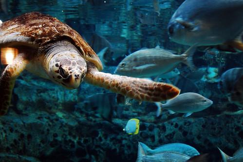 The polite turtle.