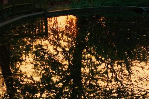 Setting Sun & Tree Reflection