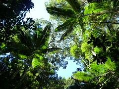 Urwald Blaetter, Fraser Island