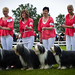 Upprepningar - Bearded Collie & Handlers