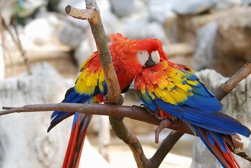 Hellrote Aras im Zoo de La Palmyre