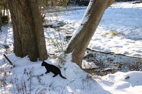 Elizabeth City Snow - Qubit and Tree