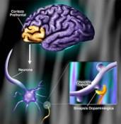 Sistema cerebral