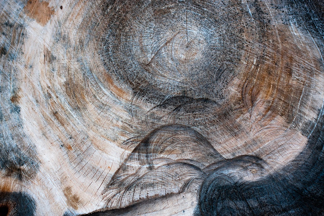 {314/365} tree stump
