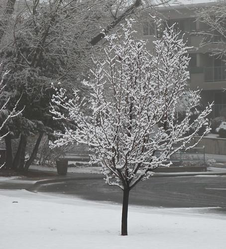 Bright Snowy Tree