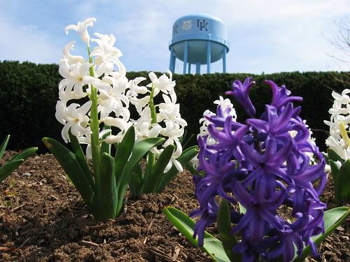 Water Tower Flowers