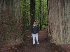 18 - Avenue of the Giants - F.K. Lane Grove - 20100526.jpg