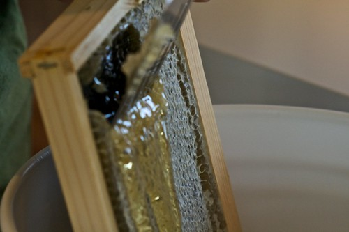 Taking honey off the frame