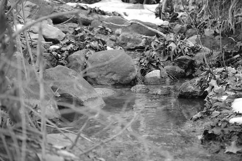 feeder flows