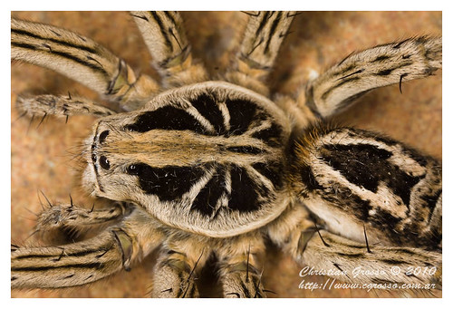 "Araña • <a style=""font-size:0.8em;"" href=""http://www.flickr.com/photos/20681585@N05/4517695085/"" target=""_blank"">View on Flickr</a>"