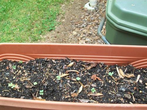 Plants Growing 1