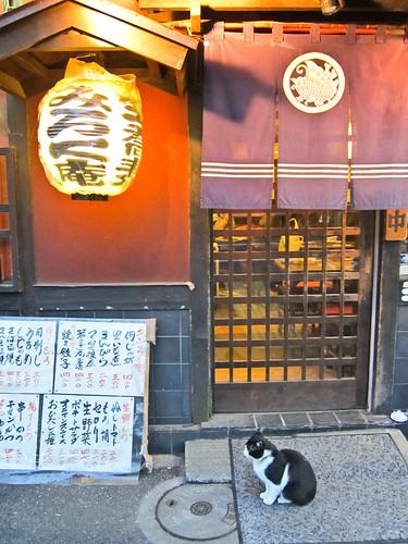千Haruki Murakami cat