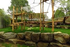 348 - 2017 07 01 - Chimpanseeverblijf
