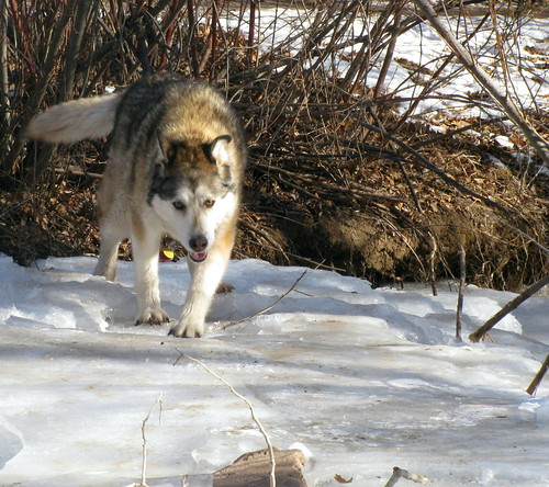 Kishka on the ice again