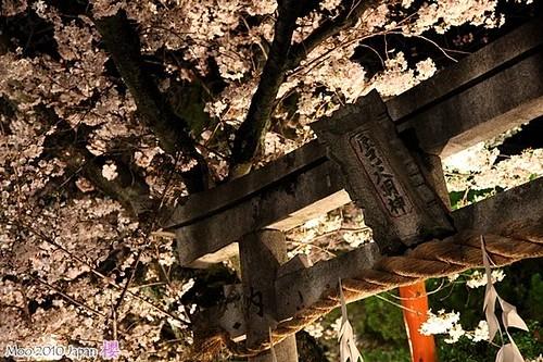 白川祇園-夜櫻12