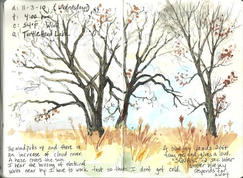 20101103_turtle_head_lake_trees