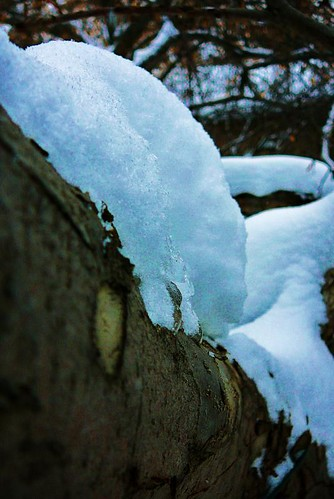 Snowy Limb