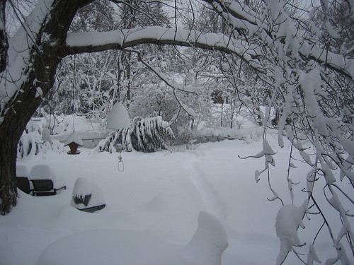 "The effect of 29"" of snow on trees"