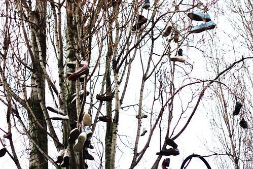 Shoe Tree 1