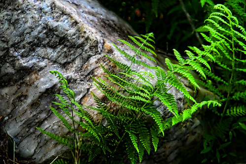 Fern and Stone
