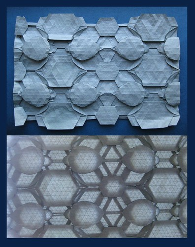 Tessellated Seaturtles (Sea Turtle Nest)