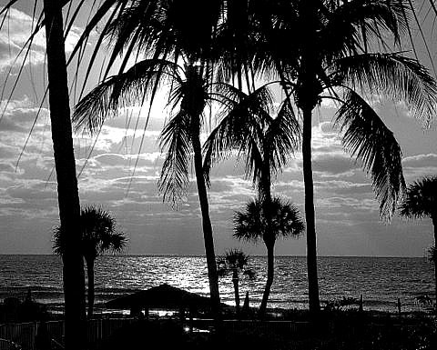 489.  Evening on Longboat Key