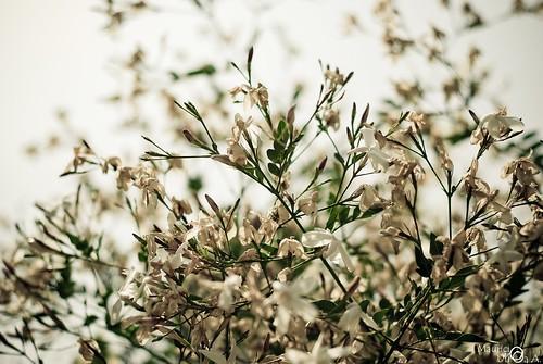 Delicate Nature. 52/365