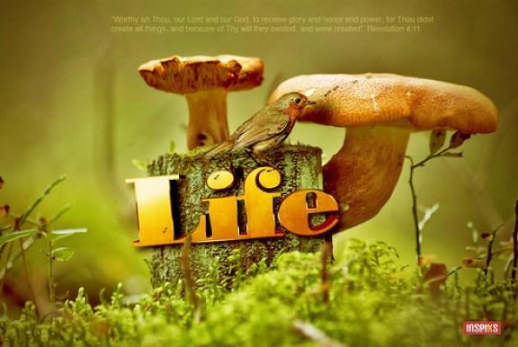Life 3D