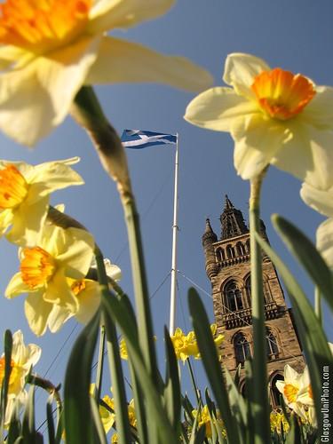Springtime on Gilmorehill