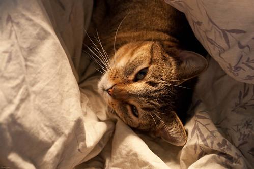 365/36: Snuggle-Cat