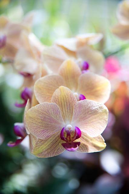Phipps Conservatory and Botanical Garden Photos