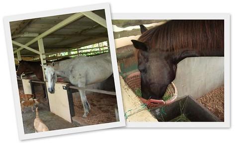 Noahs Ark Horses