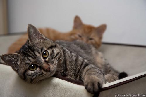 Kitten Glam 01