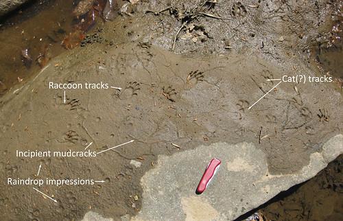 mudprints