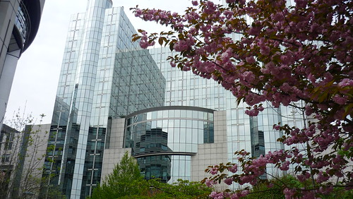 Tree in bloom by the European Parliament