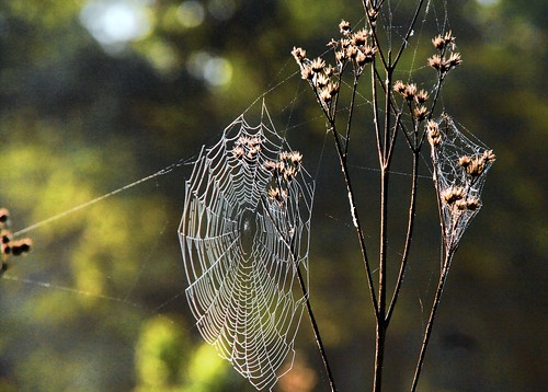 Weave Me a Web
