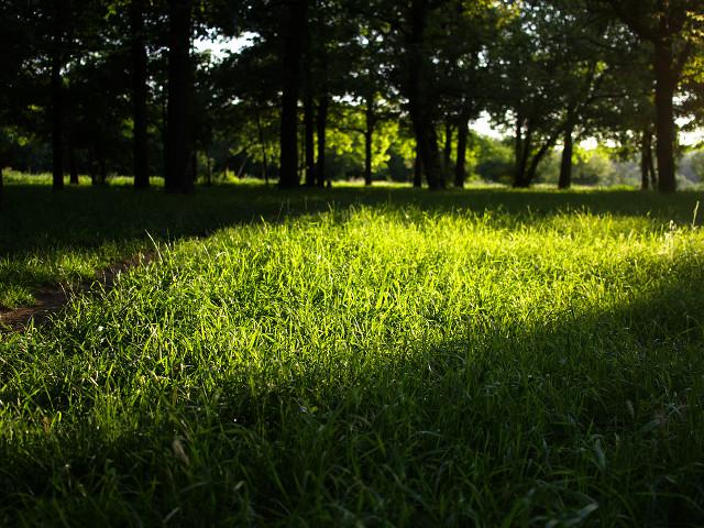 Liniștea unei dimineți de vară