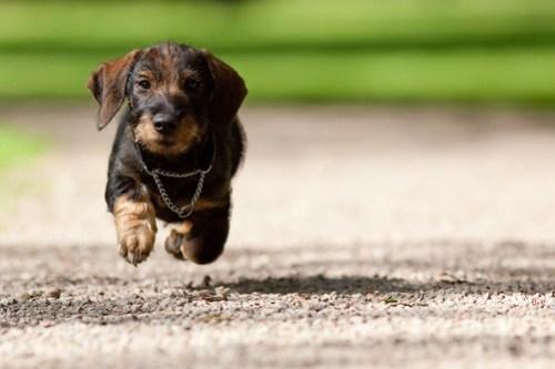 Flying Lukas